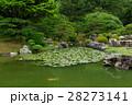 栗林公園の池のスイレンと周囲の緑 28273141