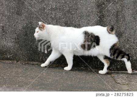 長崎の猫 28275825