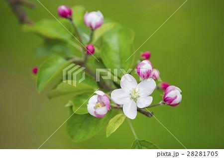 バラ 科 の 植物