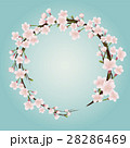 桜のフレーム素材 28286469