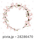 桜のフレーム素材 28286470