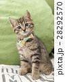 子猫 28292570