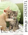 子猫 28292571