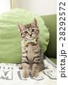 子猫 28292572