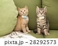 子猫 28292573