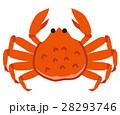 蟹 カニ 28293746