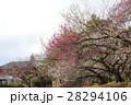 旧東京医学校と梅林 28294106