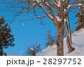 積雪 木立 木の写真 28297752