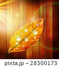 葉 しずく 滴のイラスト 28300173