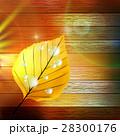 葉 しずく 滴のイラスト 28300176