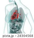 医療系CG(心臓) 28304568