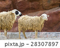 Image of a brown sheep on nature background. 28307897