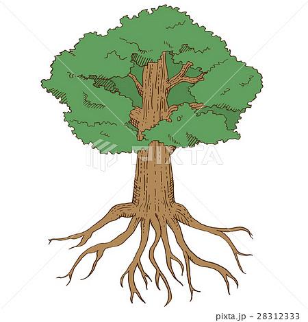 樹のイラストのイラスト素材 28312333 Pixta