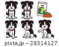 ボーダーコリー 犬 動物のイラスト 28314127