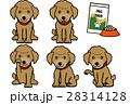 犬 動物 トイプードルのイラスト 28314128