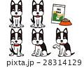 犬 ボストンテリア 動物のイラスト 28314129
