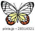 蝶のイラスト 28314321