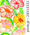 手描き水彩画でオレンジ色のお花背景テクスチャー 28314332