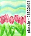 手描き水彩画でピンク色チューリップと緑の春らしい背景 28322993