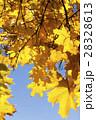 樹木 樹 ツリーの写真 28328613
