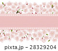 桜の花とレースのメッセージカード 28329204