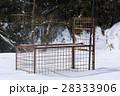 イノシシ対策 冬 28333906