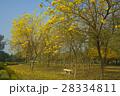 黄色 イエロー 黄色いの写真 28334811