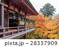 木の葉 葉 日本の写真 28337909