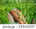 one animal green iguana 28340597