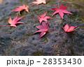 楓 紅葉 秋の写真 28353430