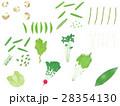野菜セット <ばらばらの野菜>  28354130