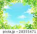 新緑 フレーム 葉のイラスト 28355471
