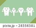 歯 大臼歯 臼歯のイラスト 28356381