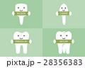 歯 種類 もんしのイラスト 28356383