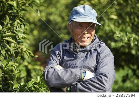 レモン農家 28357594