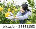 農業女子 イメージ 28358663