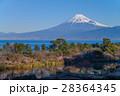 河津桜咲く西伊豆井田から、海越しの冨士山 28364345