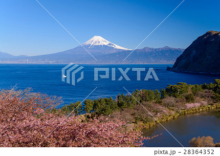 河津桜咲く西伊豆井田から、海越しの冨士山 28364352