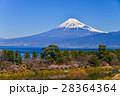 河津桜 富士山 海の写真 28364364