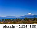 河津桜咲く西伊豆井田から、海越しの冨士山 28364365