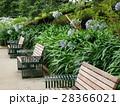 夏の憩いの場のベンチ 28366021