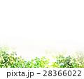 新緑 葉 枝葉のイラスト 28366022