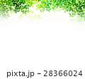 新緑 葉 枝葉のイラスト 28366024