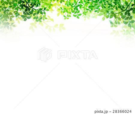 木漏れ日 テクスチャー 背景素材 28366024