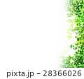新緑 葉 枝葉のイラスト 28366026