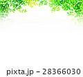 木漏れ日 テクスチャー 背景素材 28366030