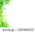 新緑 葉 枝葉のイラスト 28366032