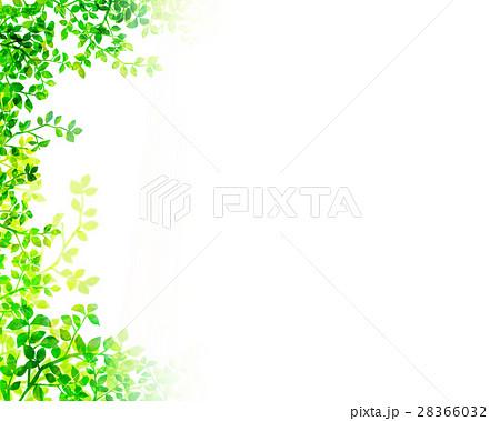 木漏れ日 テクスチャー 背景素材 28366032