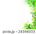 新緑 葉 枝葉のイラスト 28366033