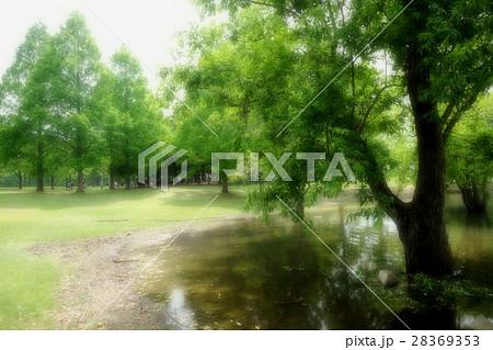 公園 新緑 28369353